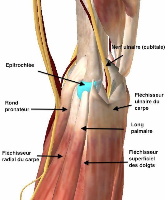 La tendinite du coude nomm e picondylite ou for Douleur genou interieur